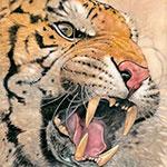 Книга джунглей. Илюстрации Анхеля Домингеса