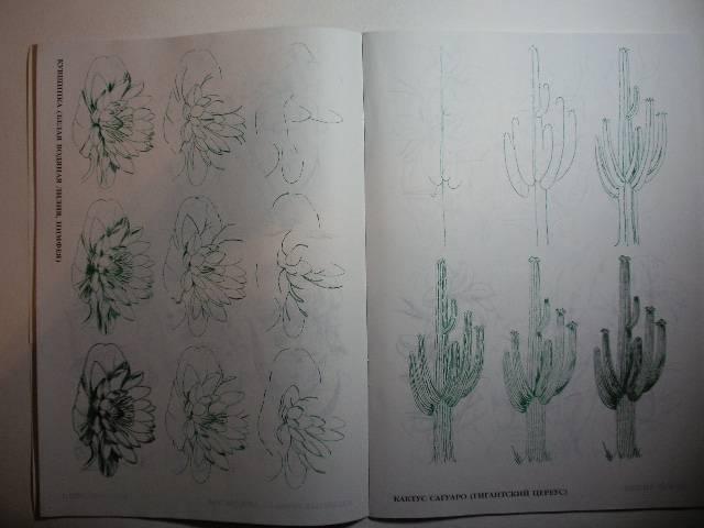 Иллюстрация 1 из 29 для Рисуем 50 цветов и деревьев - Эймис, Эймис | Лабиринт - книги. Источник: Tiger.