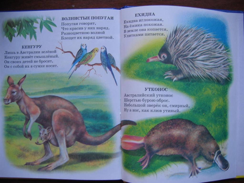 Иллюстрация 1 из 16 для Атлас животного мира - Владимир Степанов | Лабиринт - книги. Источник: Крошка Сью