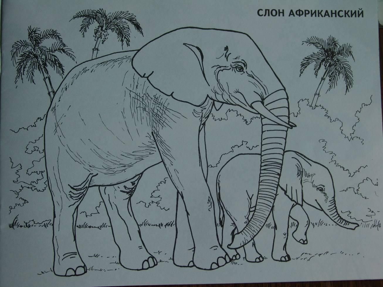 Иллюстрация 1 из 15 для Изучаем и раскрашиваем. Дикие животные. Африка | Лабиринт - книги. Источник: Лаванда