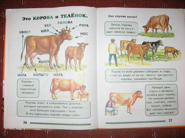 Иллюстрация 1 из 2 для Моя первая книга о животных. Для детей от 1-3 лет - Лена Данилова | Лабиринт - книги. Источник: libe
