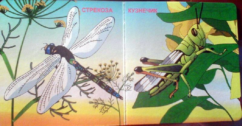 Иллюстрация 1 из 2 для Насекомые   Лабиринт - книги. Источник: Спанч Боб