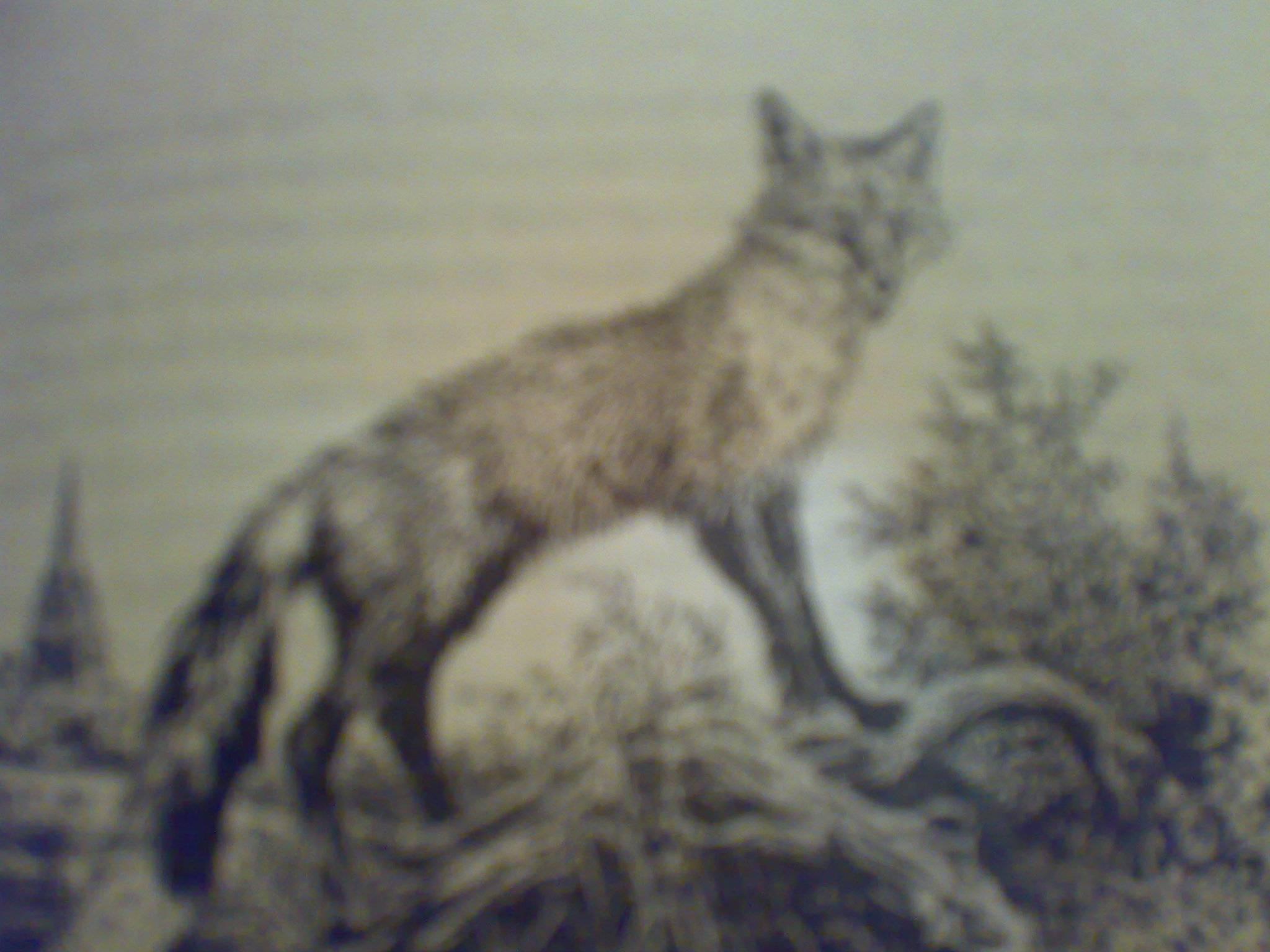 Иллюстрация 1 из 3 для Лунный зверь: Роман - Гарри Килворт   Лабиринт - книги. Источник: Юлия7