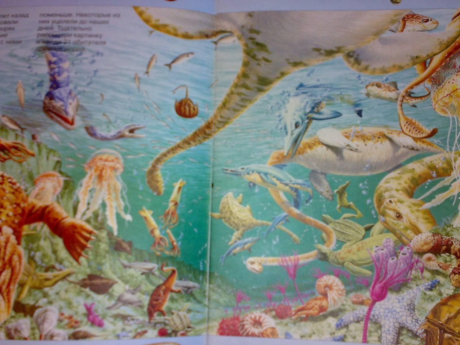 Иллюстрация 1 из 5 для На поиски морских животных - Кейт Нидхэм | Лабиринт - книги. Источник: Юлия7