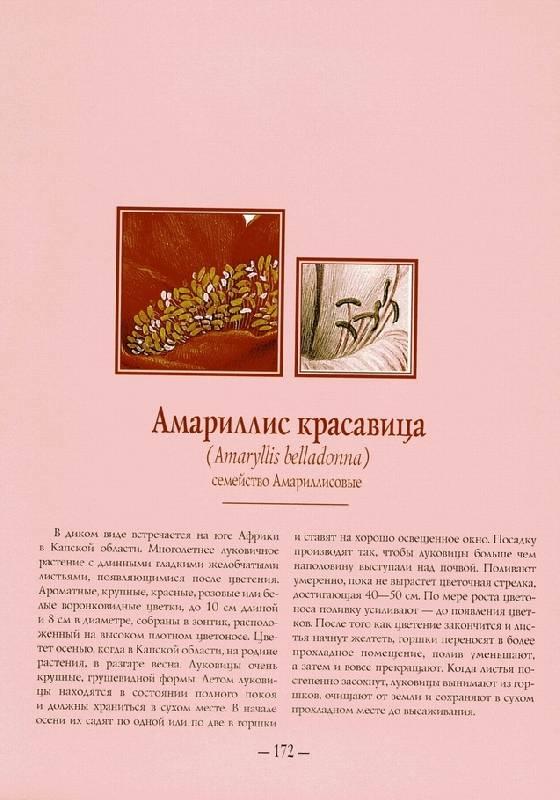 Иллюстрация 1 из 17 для Цветы мира   Лабиринт - книги. Источник: Panterra