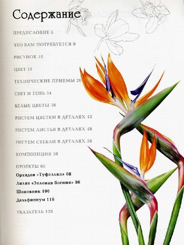 Иллюстрация 1 из 13 для Портреты цветов в акварели. Основные приемы, техника, стежки, проекты - Билли Шоуэлл | Лабиринт - книги. Источник: Panterra