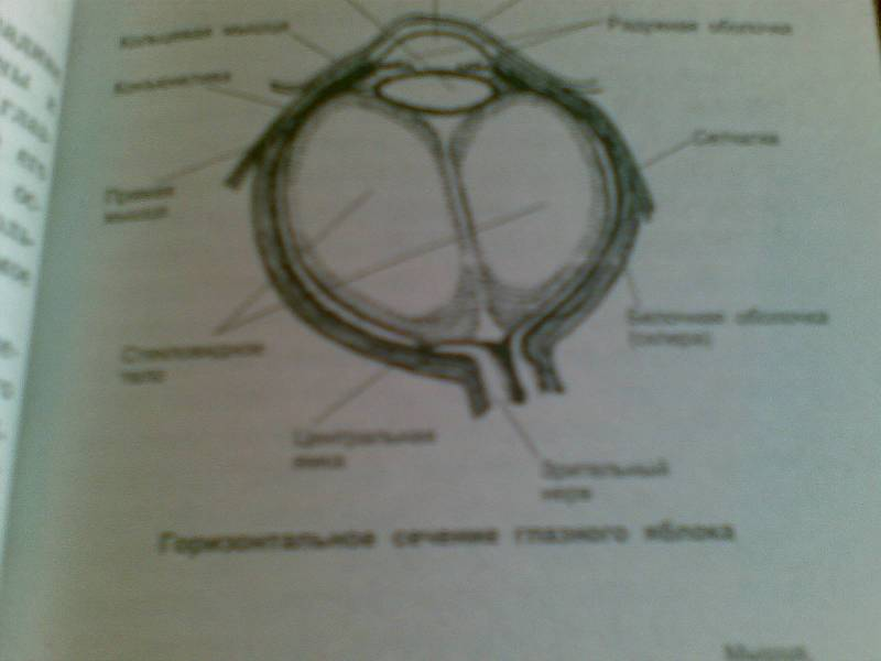 Иллюстрация 1 из 2 для Упражнения йоги для глаз - Йог Раманантата | Лабиринт - книги. Источник: Юлия7