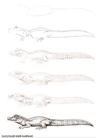 Иллюстрация 1 из 18 для Рисуем 50 исчезающих животных - Эймис, Бадд | Лабиринт - книги. Источник: Ценитель классики