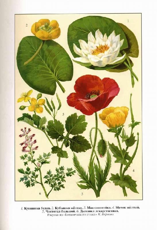 Иллюстрация 1 из 10 для Жизнь растений. Новейшая ботаническая энциклопедия - Альфред Брем | Лабиринт - книги. Источник: Panterra