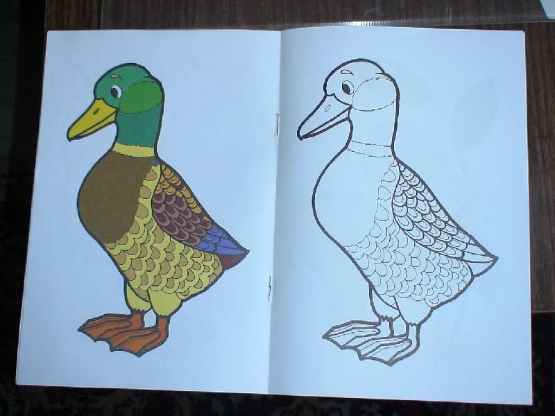 Иллюстрация 1 из 2 для Птичий двор | Лабиринт - книги. Источник: Лаванда