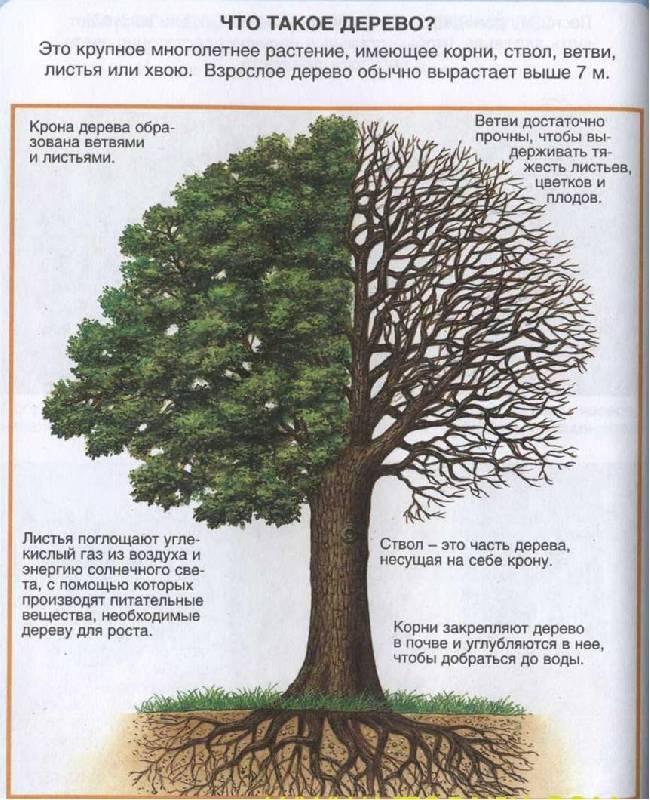 Иллюстрация 1 из 13 для Жизнь леса - Мари-Рене Пимон | Лабиринт - книги. Источник: Лана
