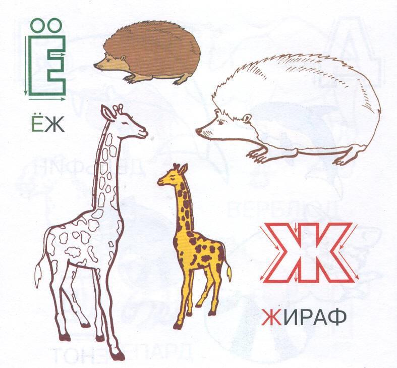 Иллюстрация 1 из 3 для Прописи-раскраски: Животные - С. Толстов   Лабиринт - книги. Источник: Пчёлка Майя