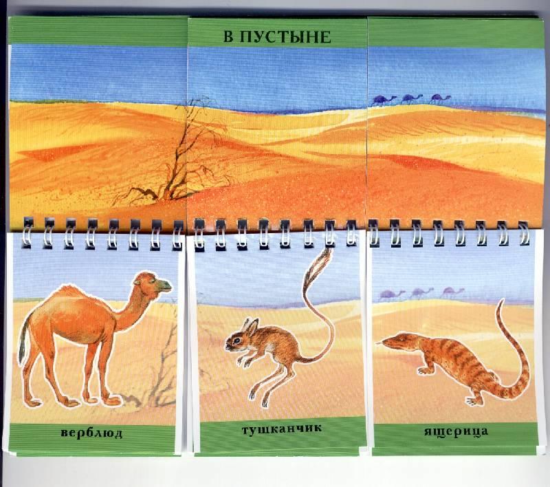 Иллюстрация 1 из 2 для Мир животных (книжка-лото)   Лабиринт - книги. Источник: *  Татьяна *