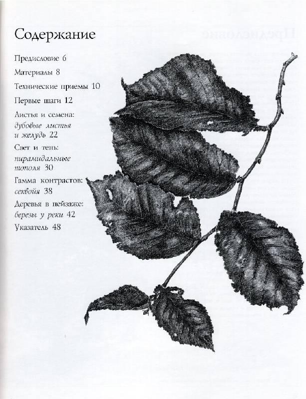 Иллюстрация 1 из 3 для Рисуем деревья - Денис Джон-Нейлор | Лабиринт - книги. Источник: *  Татьяна *