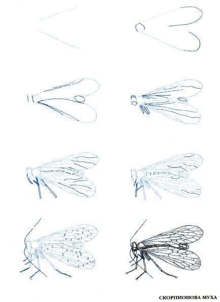 Иллюстрация 1 из 10 для Рисуем 50 насекомых - Эймис, Барнс | Лабиринт - книги. Источник: Ценитель классики