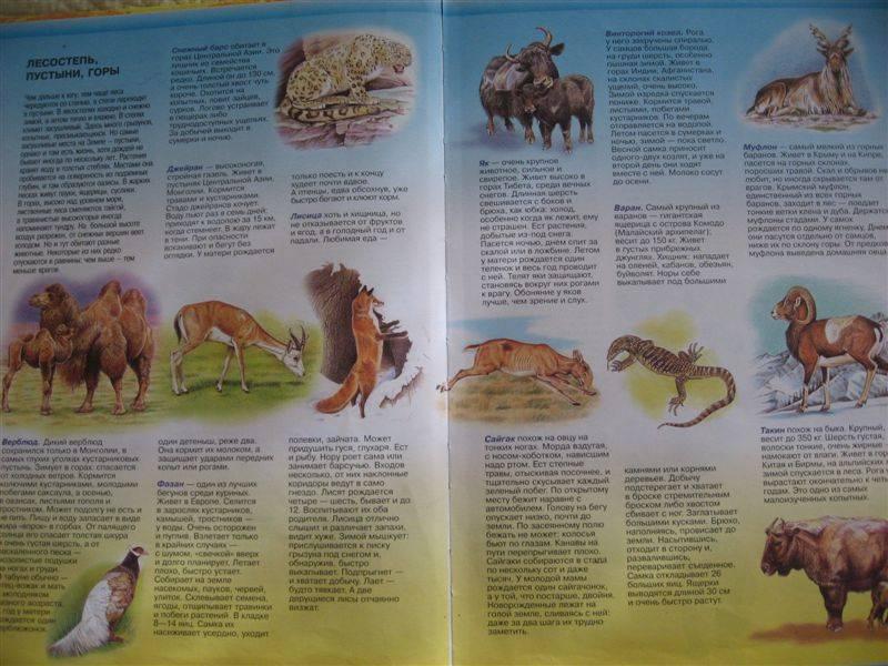 Иллюстрация 1 из 4 для Большой атлас животных | Лабиринт - книги. Источник: Юта