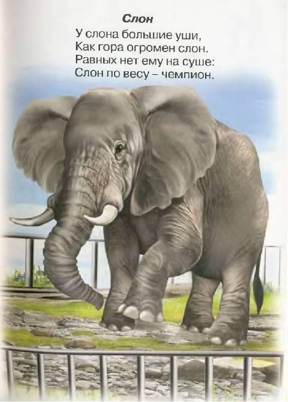Стих про слона для детей короткие