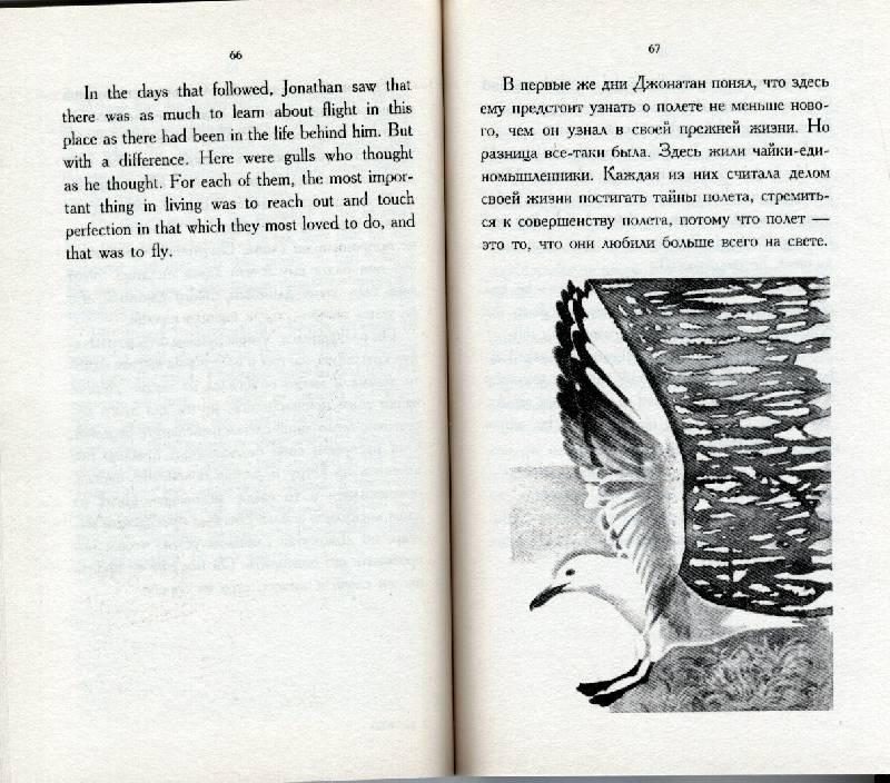 Иллюстрация 1 из 1 для книги чайка по