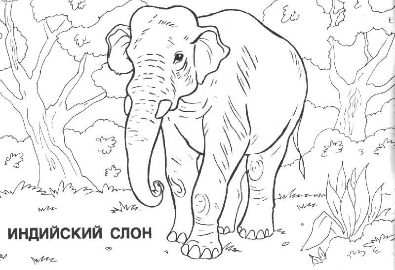 Иллюстрация 1 из 2 для Мир животных: Азия (раскраска) | Лабиринт - книги. Источник: OOlga
