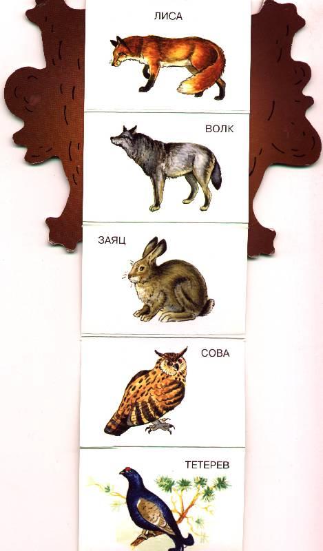 Иллюстрация 1 из 2 для Книжка на брюшке: Кто в лесу живет   Лабиринт - книги. Источник: OOlga