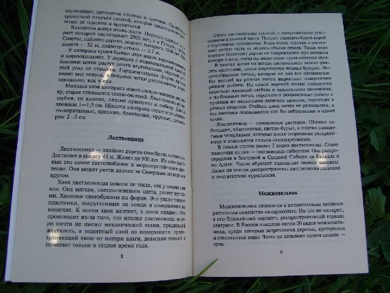 Иллюстрация 1 из 2 для Лечение хвойными растениями - Олег Филатов | Лабиринт - книги. Источник: Лаванда