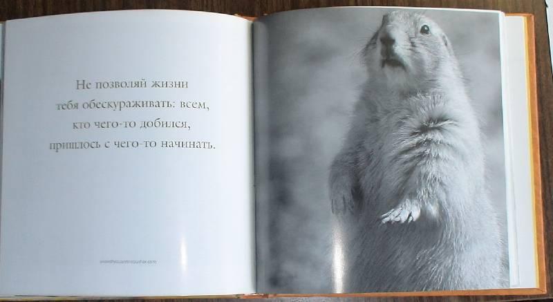Иллюстрация 1 из 2 для На пути к счастью. Мудрость жизни: как обрести счастье   Лабиринт - книги. Источник: Лаванда