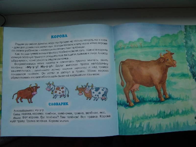 Иллюстрация 1 из 8 для Всё такое родное… - Елена Янушко | Лабиринт - книги. Источник: Лаванда