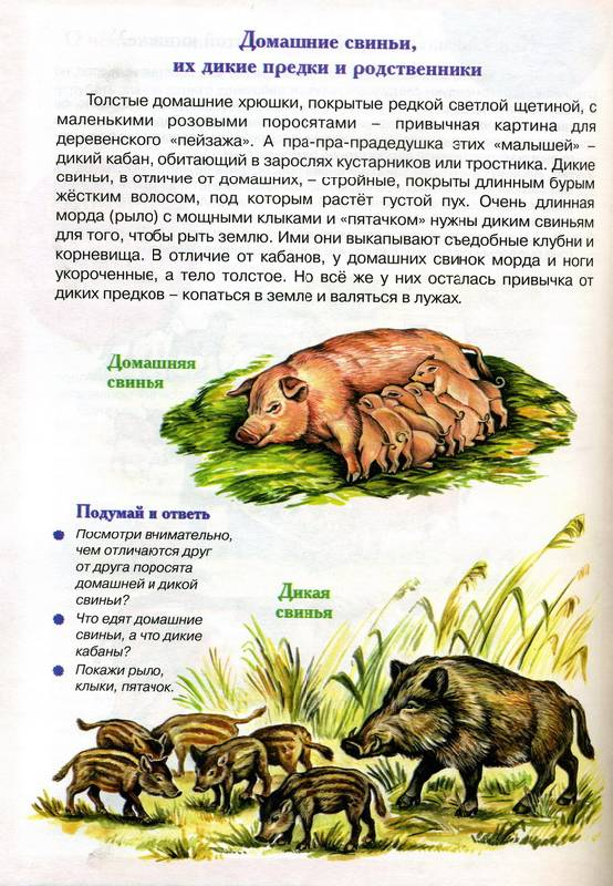 Иллюстрация 1 из 3 для Буренка и ее соседи - Валентина Муцетони   Лабиринт - книги. Источник: Дерингер  Анна Борисовна