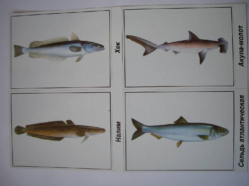Иллюстрация 1 из 3 для Игра: Рыбы морские и пресноводные | Лабиринт - книги. Источник: Татиана