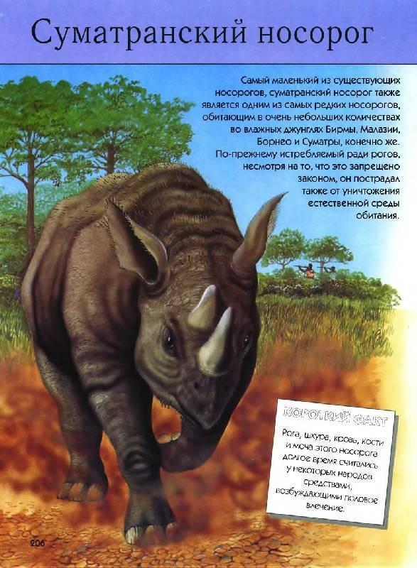 Вымершие виды животных artassortyru