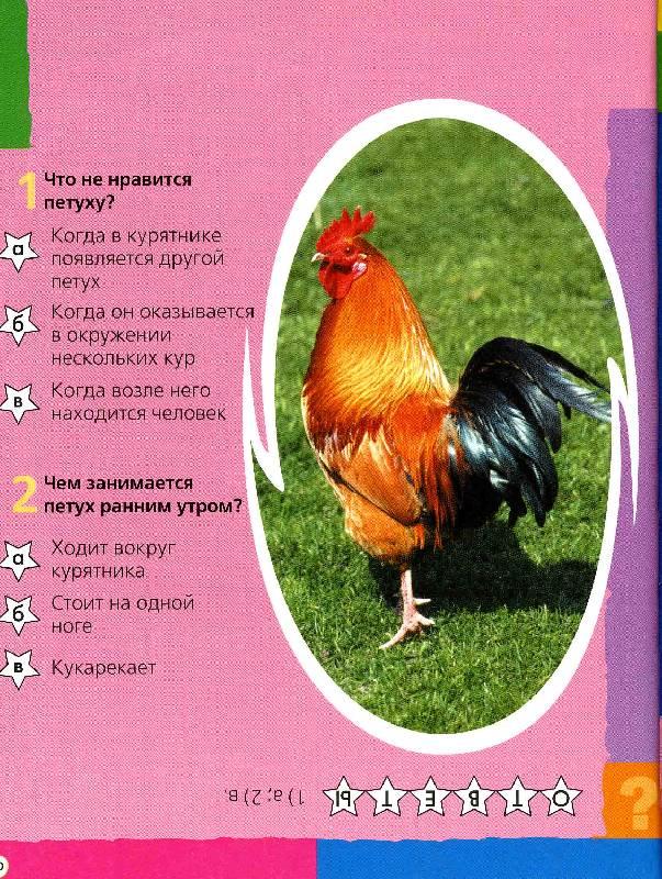 Иллюстрация 1 из 19 для Что ты знаешь о животных? 200 вопросов и ответов | Лабиринт - книги. Источник: РИВА