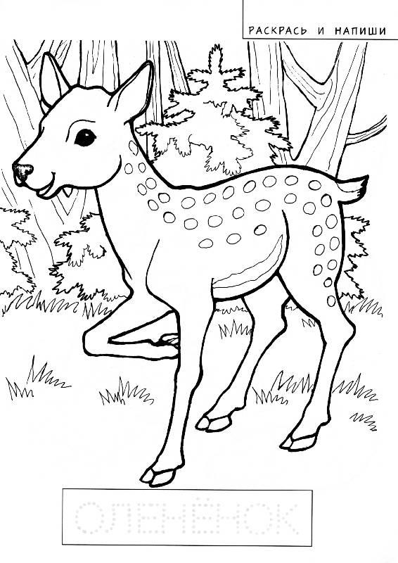 Иллюстрация 1 из 3 для Развивающие раскраски | Лабиринт - книги. Источник: РИВА