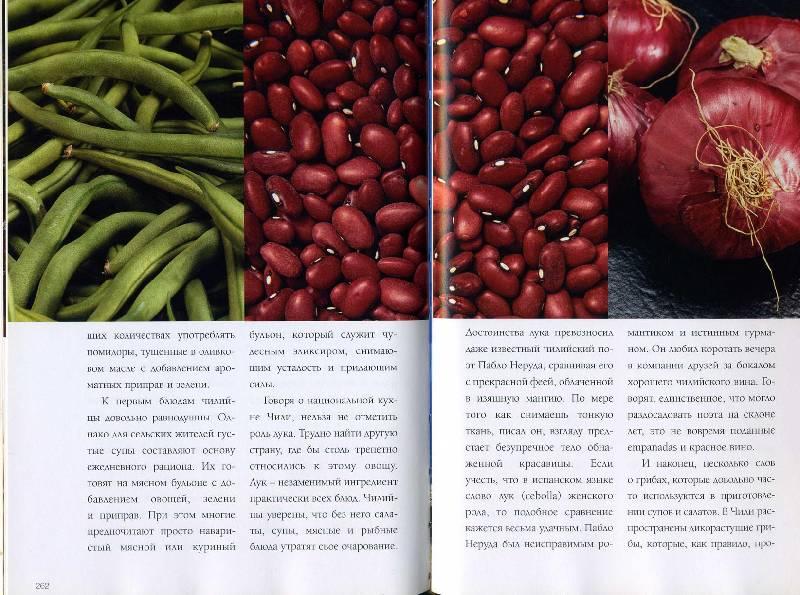 Иллюстрация 1 из 2 для Вина Чили. Взгляд из России - Кауфман, Криттенден, Королева | Лабиринт - книги. Источник: Тэль