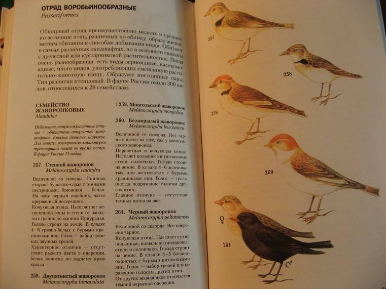 Иллюстрация 1 из 4 для Атлас-определитель птиц - Владимир Храбрый | Лабиринт - книги. Источник: Krofa