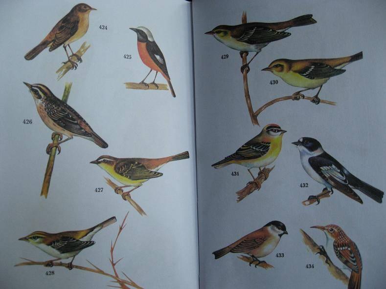 Атлас определитель птиц владимир