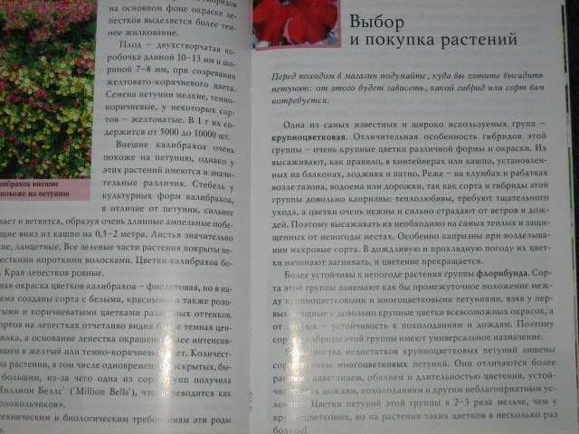 Иллюстрация 1 из 5 для Петунии - М.В. Горбаченков | Лабиринт - книги. Источник: МЕГ