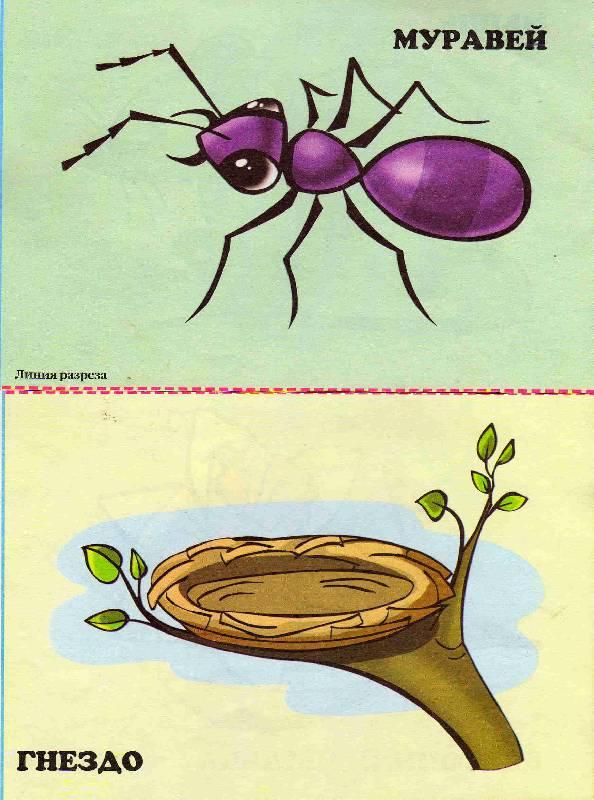 Иллюстрация 1 из 5 для Кто где живет и что ест | Лабиринт - книги. Источник: С  М В