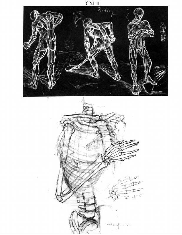 Anatomy For The Artist Jeno Barcsay Pdf Writer - vplivin