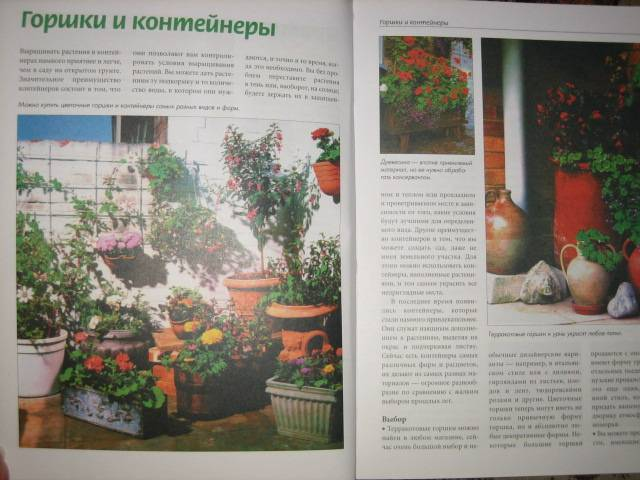 Иллюстрация 1 из 5 для Цветы на балконе | Лабиринт - книги. Источник: МЕГ