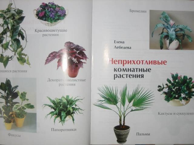 Иллюстрация 1 из 15 для Неприхотливые комнатные растения - Елена Лебедева | Лабиринт - книги. Источник: МЕГ