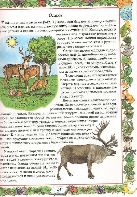 Иллюстрация 1 из 3 для Природоведение. Первый учебник вашего малыша - Галина Шалаева   Лабиринт - книги. Источник: Марта