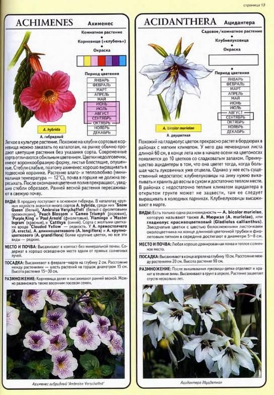 Книга хессайон все о луковичных растениях