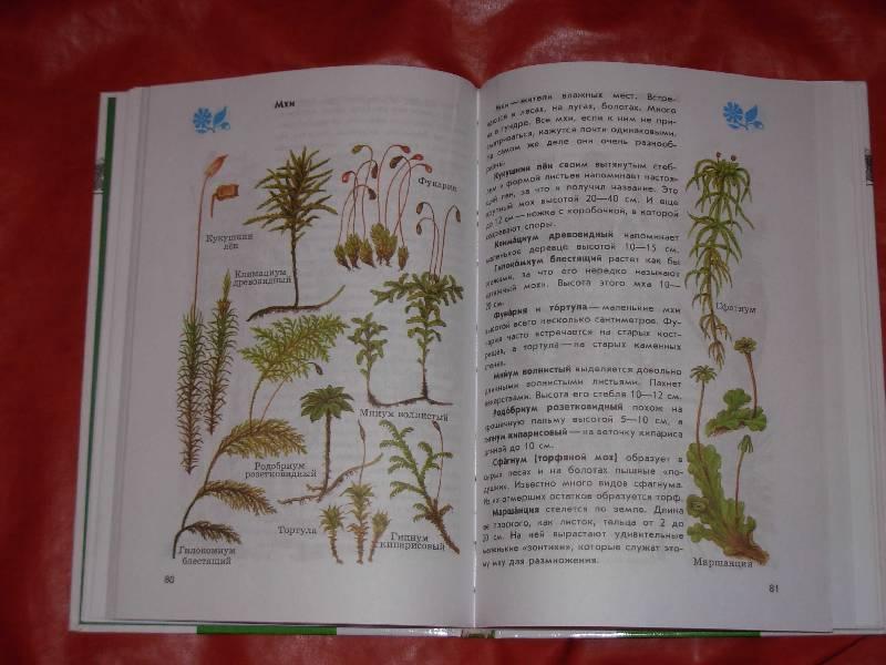 Учебник по русскому языку 6 класс ладыженская зеленый учебник читать онлайн