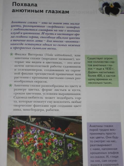 Иллюстрация 1 из 6 для Уход за анютиными глазками - Елена Колесникова | Лабиринт - книги. Источник: МЕГ