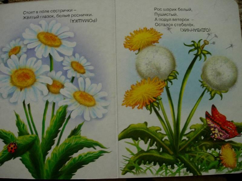 Иллюстрация 1 из 4 для Загадки о цветах | Лабиринт - книги. Источник: Geny