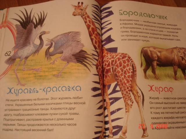 Иллюстрация 1 из 2 для Большая энциклопедия животных для малышей | Лабиринт - книги. Источник: Оксана