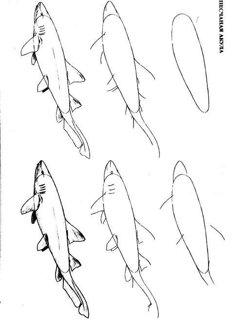 Четвертая иллюстрация к книге рисуем