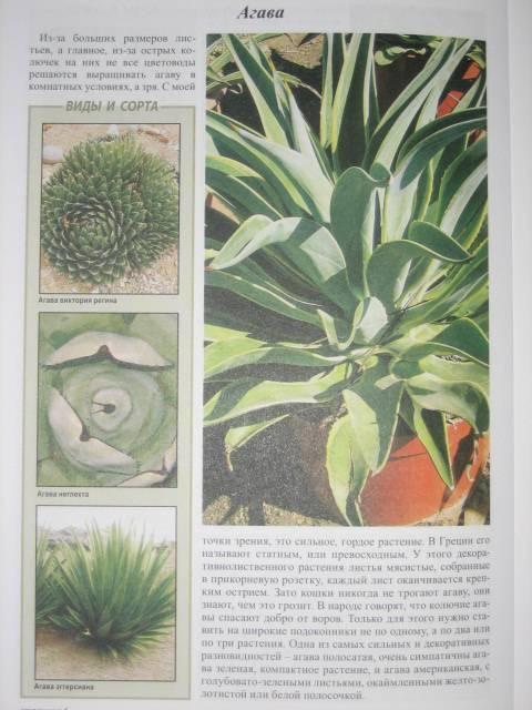 Иллюстрация 1 из 5 для Все о цветах в вашем доме - Октябрина Ганичкина | Лабиринт - книги. Источник: МЕГ