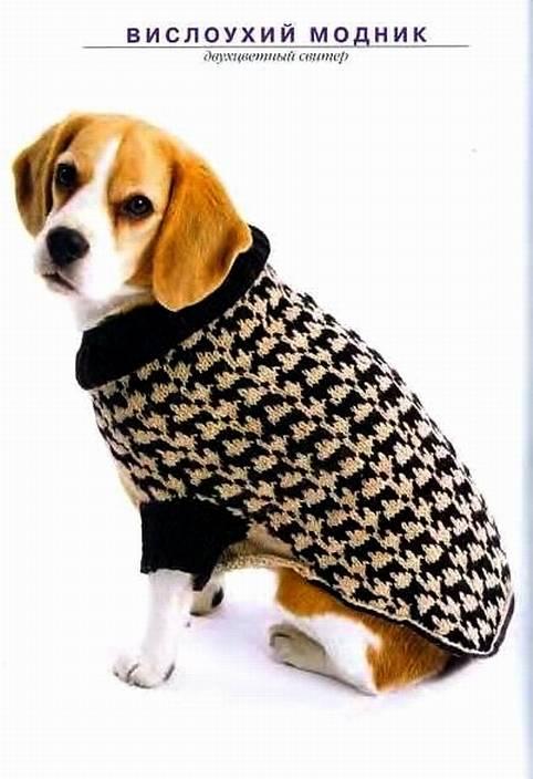 Выкройки и схемы вязания одежды для собак.  Удобный вязаный жилет.  Попона для бульдога.