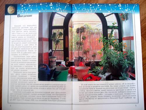 Растения комнатные растения для